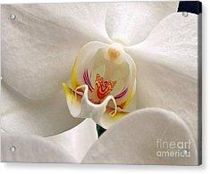 Soft Orchid Acrylic Print by Kathi Mirto