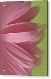 Soft Petals Acrylic Print
