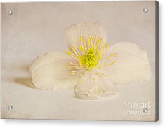Soft Pink Flower Acrylic Print by Svetlana Sewell