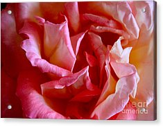 Acrylic Print featuring the photograph Soft Pink Petals Of A Rose by Janice Rae Pariza