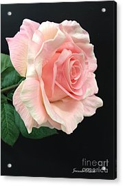 Acrylic Print featuring the photograph Soft Pink Rose 1 by Jeannie Rhode