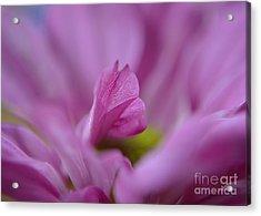 Soft Purple Acrylic Print by Michelle Meenawong