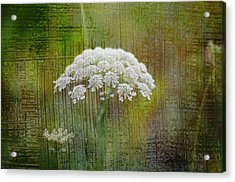 Soft Summer Rain And Queen Annes Lace Acrylic Print by Suzanne Powers