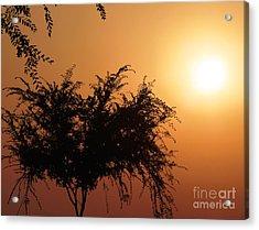 Soft Sunrise Acrylic Print