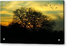 Soft Sunset Acrylic Print by Joan Bertucci