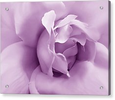 Soft Violet Rose Flower Acrylic Print by Jennie Marie Schell