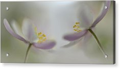 Soft Whispering Acrylic Print