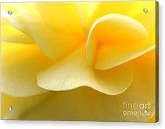 Soft Yellow Acrylic Print