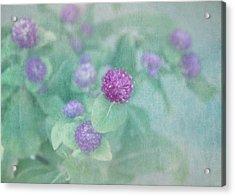 Softly Clover Acrylic Print by Kim Hojnacki