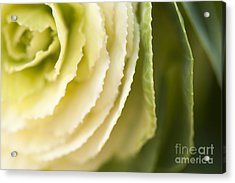 Softly Green Acrylic Print by Anne Gilbert