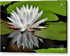 Acrylic Print featuring the photograph Softly by Kathy Baccari