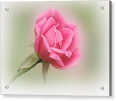 Softly Pink Acrylic Print by Sandy Keeton