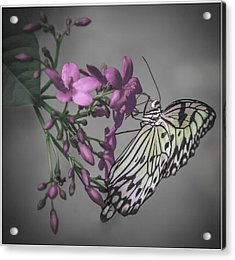 Softly Reflected On A Wing Acrylic Print by Jill Balsam