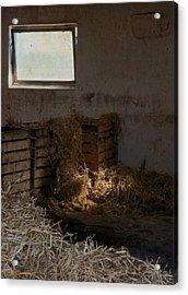 Softly The Sun Acrylic Print by Odd Jeppesen