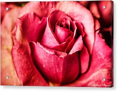 Acrylic Print featuring the photograph Softly by Wallaroo Images