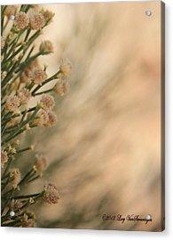 Softness In The Desert Acrylic Print