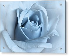 Softness Of A Blue Rose Flower Acrylic Print by Jennie Marie Schell