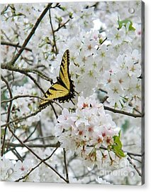 Softness Of Spring Acrylic Print