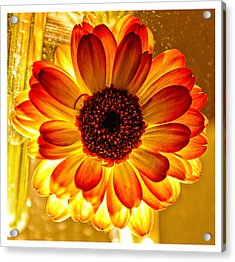Solar Flower Acrylic Print by Louis Dallara
