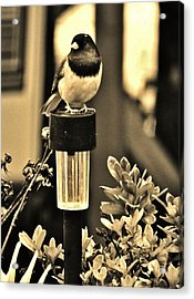 Acrylic Print featuring the photograph Solar Light Sitting by VLee Watson