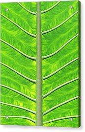 Solar Panel Leaf Veins Acrylic Print