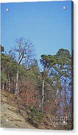 Acrylic Print featuring the photograph Solid Ground by Felicia Tica