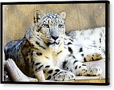 Solid Acrylic Print