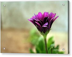 Acrylic Print featuring the photograph Solitaire by Chris Anderson