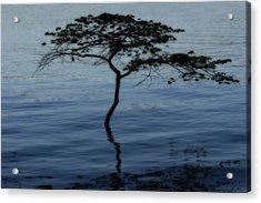 Solitaire Tree Acrylic Print