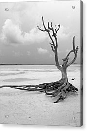 Solitary 1 Acrylic Print by Sarah-jane Laubscher