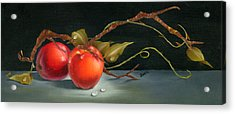 Solitary Apples Acrylic Print