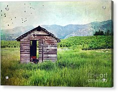 Solitary Cabin Acrylic Print by Sylvia Cook