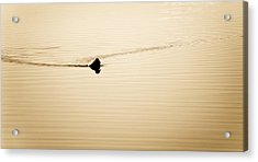 Solitary Duck Acrylic Print by Marilyn Hunt