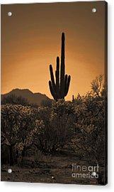 Solitary Saguaro Acrylic Print by Deb Halloran