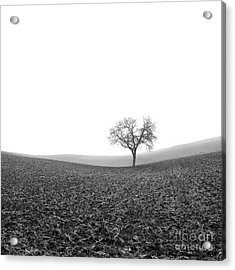 Solitary Tree In Winter. Auvergne. France Acrylic Print by Bernard Jaubert