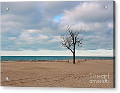 Solitude Acrylic Print by Dipali S