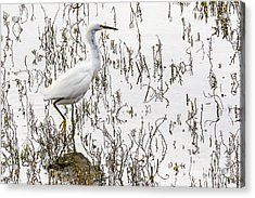 Solitude Acrylic Print by Kate Brown