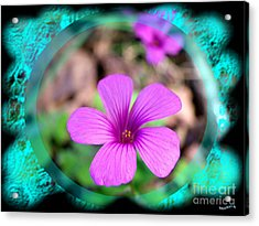 Solo Acrylic Print by Bobby Hammerstone