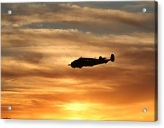 Acrylic Print featuring the photograph Solo by David S Reynolds