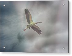 Acrylic Print featuring the photograph Solo Flight by Dennis Baswell