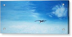 Solo Flight Acrylic Print by Mike Durco