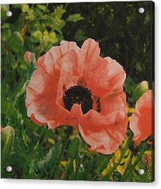 Solo Poppy Acrylic Print