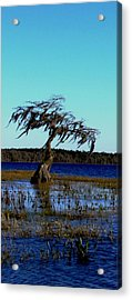 Solo Acrylic Print by Will Boutin Photos