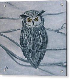 Solstice Owl Acrylic Print
