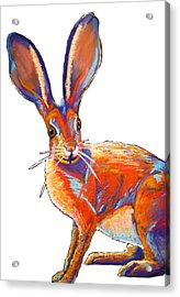 Some Bunnie Acrylic Print by Holly Wright