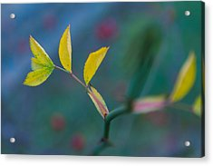 Some Color Acrylic Print by Andreas Levi