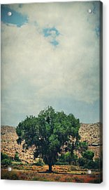 Some Days I Believe Acrylic Print by Laurie Search