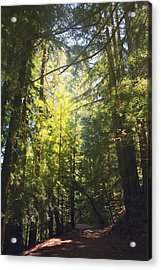 Some Days Really Shine Acrylic Print by Laurie Search