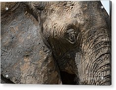 Acrylic Print featuring the photograph Some Elephants Prefer Mud by Chris Scroggins