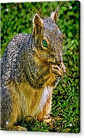 Some Squirrels Are Big Acrylic Print by Bob and Nadine Johnston